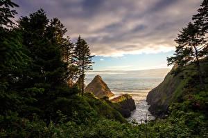 Фото Штаты Берег Деревья Утес Мох Florence Oregon Природа