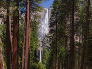Фотографии Штаты Парки Водопады Йосемити Деревья Ствол дерева Утес