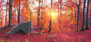 Фотографии Украина Осенние Леса Камень Закарпатье Деревья Листья Ствол дерева Мох