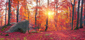 Фотографии Украина Осенние Лес Камень Закарпатье Дерево Лист Ствол дерева Мох Природа