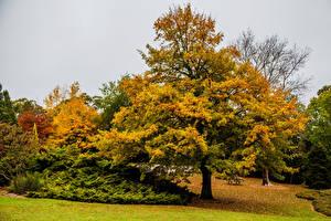 Картинки Австралия Сады Осенние Деревья Mount Lofty Botanic Garden Природа