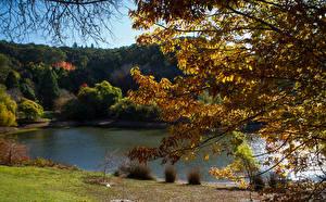 Обои Австралия Парки Пруд Осень Ветки Mount Lofty Botanic Garden