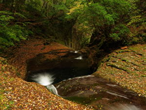 Обои Осенние Леса Водопады Листва
