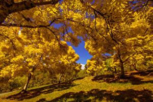 Картинки Осень Парки Деревья Природа