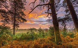 Фото Осень Рассвет и закат Небо Деревьев Ствол дерева Кусты Облака Природа