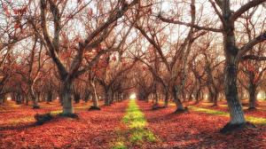 Обои Осенние Деревья Листва HDRI