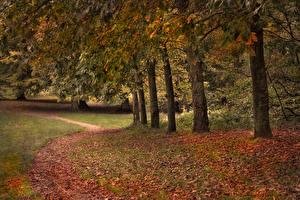 Картинка Осенние Деревья Листва Тропа Природа