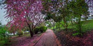 Фотография Бразилия Парки Осень Деревья Duartina Природа