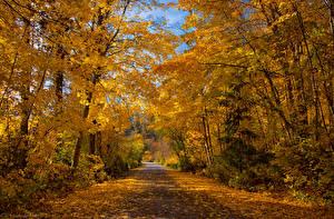 Картинки Канада Парки Осенние Деревья Листва Kokanee Creek Provincial Park British Columbia