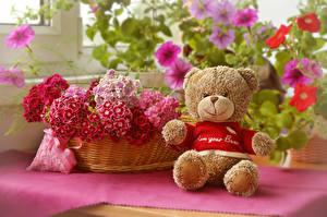 Фотография Гвоздики Плюшевый мишка Корзинка Цветы