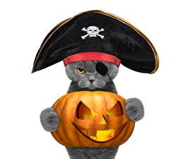 Картинки Коты Хеллоуин Тыква Пираты Белый фон Шляпа Животные