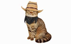 Фото Кошка Шляпе Белый фон Смешные животное
