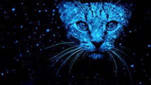 Фото Коты Морда Усы Вибриссы Смотрит Снежинки Животные