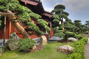 Фотографии Китай Гонконг Сады Дома Камень Деревья Кусты Nan Lian Garden Природа