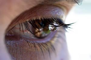 Фото Крупным планом Ресницы Глаза Капля Слезы