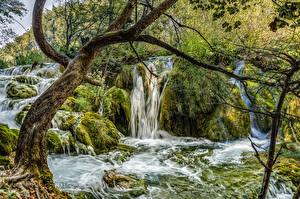 Картинки Хорватия Парки Водопады Ствол дерева Мох Plitvice Lakes National Park Природа