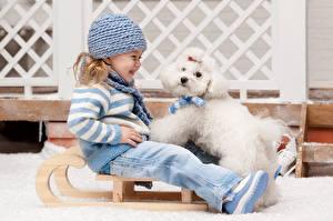 Картинки Собаки Девочки Шапки Смех Болоньез Свитера Санях ребёнок