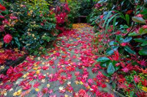 Фото Англия Сады Осенние Кусты Листва Walsall Garden