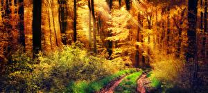 Обои Леса Осенние Деревья Кусты Тропа Лучи света