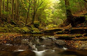 Картинка Леса Водопады Камень Осенние Листья Мох