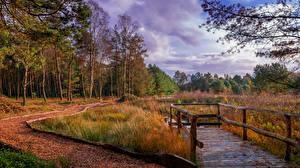 Картинки Германия Осенние Мосты Деревья Трава Kirchwalsede Saxony Природа