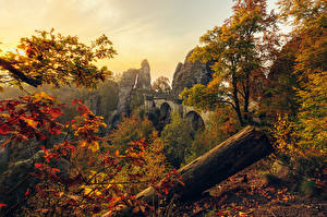 Обои Германия Осень Скала Ветки Деревья Листья Saxony Природа картинки