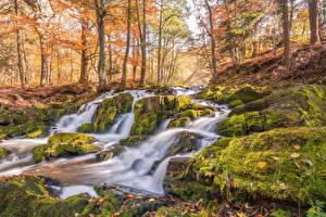 Фото Германия Осенние Водопады Деревья Мох Selkefall Harzgerode Природа