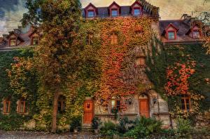 Фотография Германия Здания Дизайн Деревья Rothenburg Города