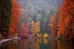 Фотографии Германия Парки Осенние Озеро Деревья Saxon Switzerland National Park
