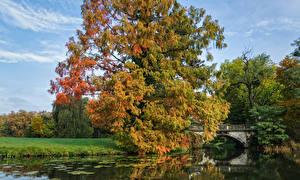 Фото Германия Парки Осень Пруд Мосты Деревья Worlitz Gardens Природа
