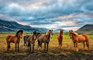 Фотография Луга Лошади Животные