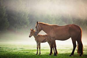 Картинка Лошадь Детеныши 2 животное