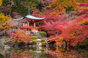 Фото Япония Киото Сады Осень Пагоды Пруд Мосты