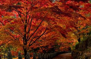Картинка Япония Парки Осенние Дороги Деревья Ограда Nara Park Природа