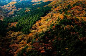 Обои Япония Парки Леса Осенние Nara Park Природа