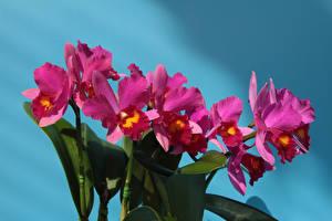 Фотографии Орхидеи Вблизи Розовый