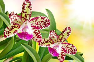 Картинка Орхидеи Вблизи 2