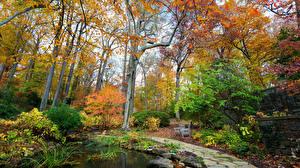 Картинка Парки Осенние Пруд Деревья Природа