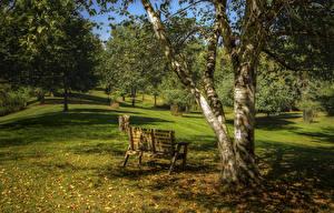 Картинка Парк Осенние Деревьев Скамья Листья Ствол дерева Природа