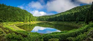 Картинки Португалия Леса Озеро Кусты Sao Miguel Azores Природа