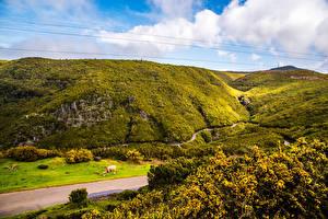 Обои Португалия Луга Холмы Madeira Природа