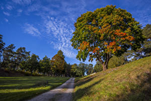 Обои Дороги Осень Деревья Трава Природа картинки