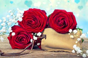Картинка Розы Вблизи Втроем Красный Шаблон поздравительной открытки Цветы