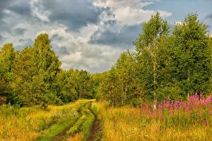 Фотография Россия Леса Дороги Осенние Деревья Трава Природа