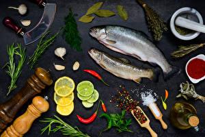 Фотография Морепродукты Рыба Лимоны Укроп Специи Чеснок Серый фон Соли
