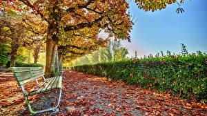 Обои Времена года Осень Лист Скамейка Кустов Природа