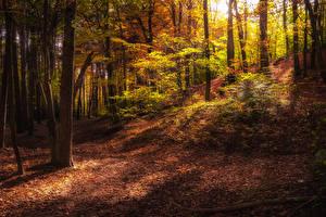 Картинка Времена года Осенние Леса Деревья Листья