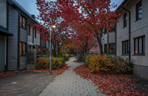 Картинка Швеция Стокгольм Осенние Здания Вечер Улица Уличные фонари Листва Деревья Города