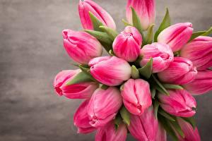 Картинки Тюльпаны Букеты Розовый