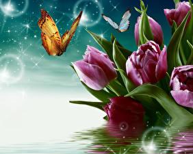 Картинки Тюльпаны Крупным планом Бабочки Вода Розовый
